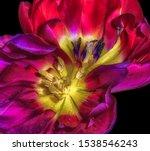 Macro Of The Colorful Hearts O...