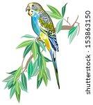 budgerigar australian parakeet... | Shutterstock .eps vector #153863150