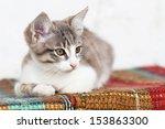 Small Kitten Sitting On The...