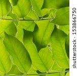green leaf texture for... | Shutterstock . vector #153866750