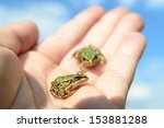 small frog rescued from a busy... | Shutterstock . vector #153881288