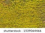 Uniform Texture Of Yellow Gree...