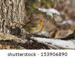 robin  erithacus rubecula    Shutterstock . vector #153906890