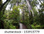 Pathway In A Rain Forest In New ...