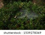 Mystery Spider Shiny Net  Web ...
