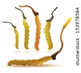 vector illustration of cordyceps set in isolated white. (Dong chong xia cao). China herbal