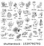 ink vector vintage illustration ... | Shutterstock .eps vector #1539790793