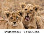 junge l        wen  panthera... | Shutterstock . vector #154000256