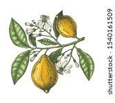 hand drawn citrus fruits  ...   Shutterstock .eps vector #1540161509