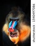 Portrait Of A Mandrill Showing...