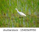 Long Legged Wading Bird With A...