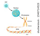 from gene to dna and chromosome ... | Shutterstock .eps vector #1540714523
