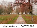 Late Autumn. The Path In The...