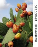 Prickly Pears  Opuntia Ficus...