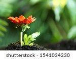 Fresh Flower In Fertile Soil...