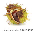 chestnut on a white background  | Shutterstock . vector #154135550