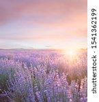 sunset sky over a summer... | Shutterstock . vector #1541362199