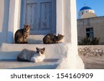 street cats in athens  greece | Shutterstock . vector #154160909