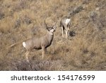 Wyoming Wildlife Meanders Alon...