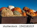 Variety Of Pumpkins In Fall...