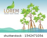 Mangrove Forest Background...