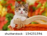 Stock photo little kitten in basket with autumn leaves 154251596