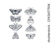 butterflies and moths... | Shutterstock .eps vector #1542657506