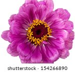 flowers on a white background | Shutterstock . vector #154266890