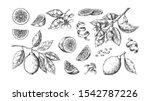 hand drawn lemon. vintage lime... | Shutterstock .eps vector #1542787226