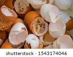 Eggshell  Many Broken Eggshell  ...