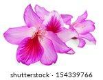 beautiful pink flowers of... | Shutterstock . vector #154339766