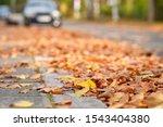Colorful Fallen Autumn Leaves...