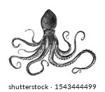 charcoal pencil drawing octopus ... | Shutterstock . vector #1543444499
