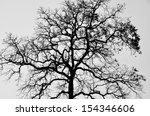 Silhouette Branch Tree  Black...
