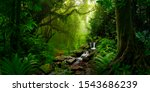 Tropical Rain Forest In Asia
