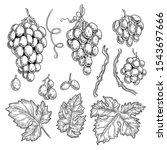 grape doodle. wine symbols for... | Shutterstock .eps vector #1543697666