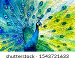 Watercolor Painting   Colorful...