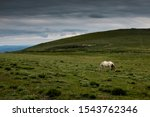 White Horse Grazing Alone On...