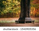 Bench Around A Tree In Autumn...