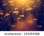 vintage photo of wild flowers... | Shutterstock . vector #154394588