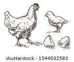 hen with little chicken....   Shutterstock .eps vector #1544032583
