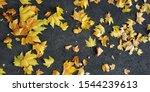 Maple Leaves On New Asphalt....