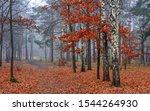 Forest. Autumn. Fog. Autumn...