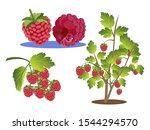 raspberries set. branch  bush...   Shutterstock .eps vector #1544294570