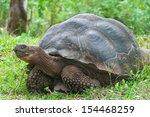 Stock photo single giant galapagos tortoise 154468259