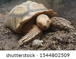 Stock photo close up african spurred tortoise resting in the garden slow life africa spurred tortoise 1544802509
