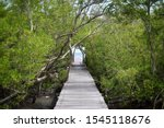 Nature Trail  Mangrove Forest...