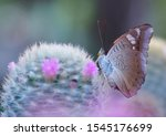 A Butterfly Flying On Cactus...