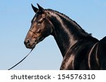 Stock photo portrait of black horse against blue sky 154576310