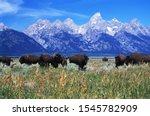Native American Bison  Buffalo  ...